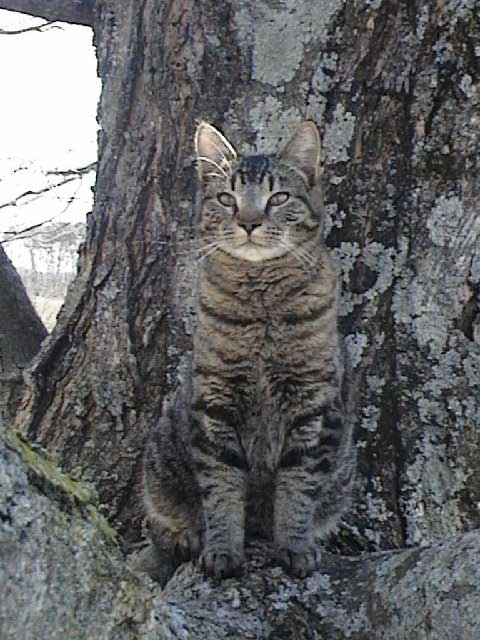 L'invisibilité a un prix. camouflage-cats-151